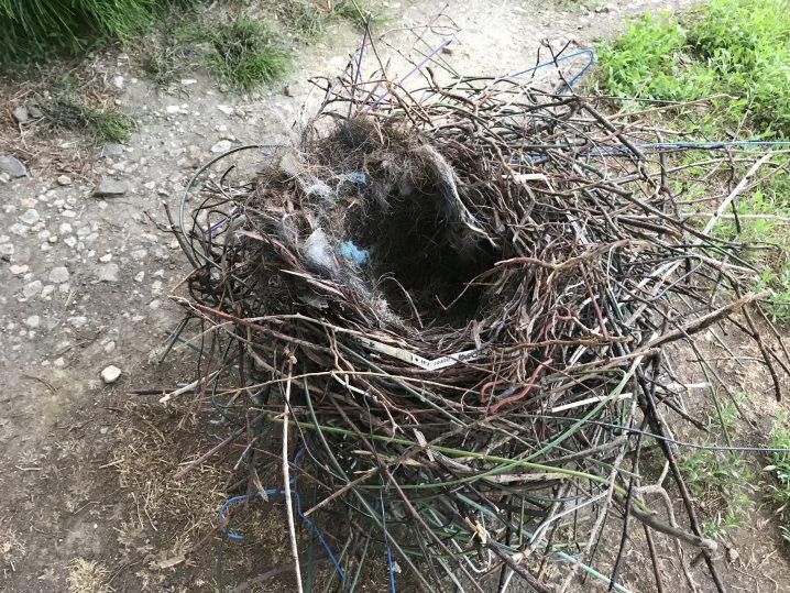 カラスの巣の撤去作業のご依頼 | 便利屋 七道