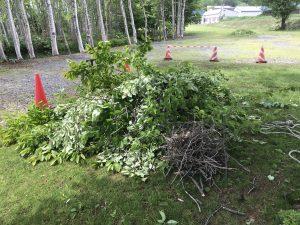 伐採した枝木