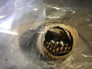 蜂の巣の中