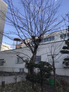 木の上のカラスの巣