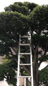木に立てかけた梯子