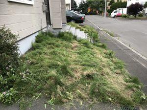 草刈り後②