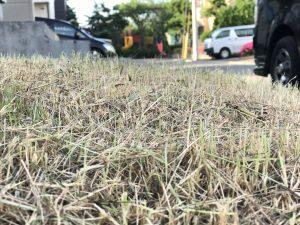 短く刈り上げられた雑草