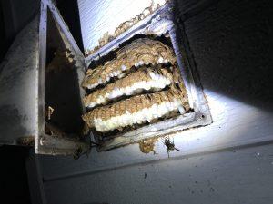 空間目一杯に蜂の巣が