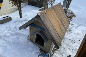 犬小屋の解体
