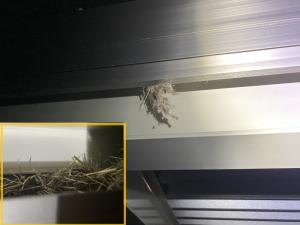 カーポートの隙間にスズメの巣がはみ出ている
