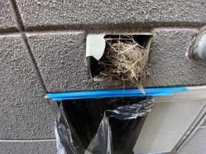 換気フードに雀の巣