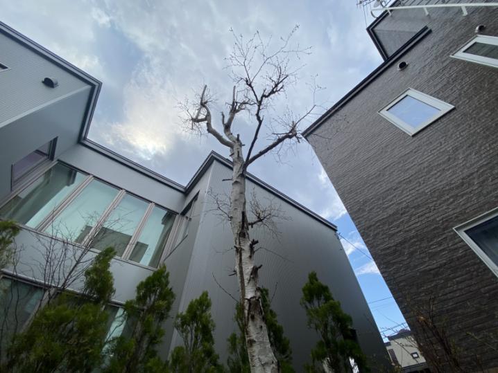 小さく細い木でも作られる時は作られる