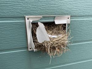 スズメの巣は不衛生です