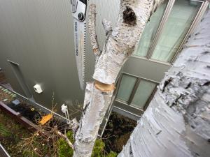 太い枝木のカットで巣作りが不可能に