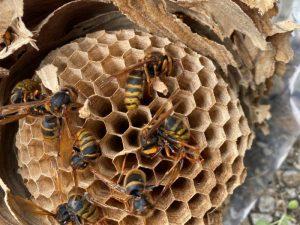 駆除された蜂たちがたくさん